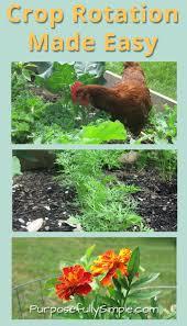 crop rotation made easy simplify gardening