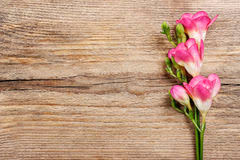 wood flowers pink freesia flowers wood stock photos images pictures 70 images