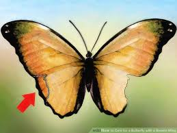 how to care for a butterfly with a broken wing 11 steps