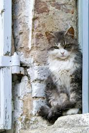 564 best kittens images on pinterest animals kitty cats and cats