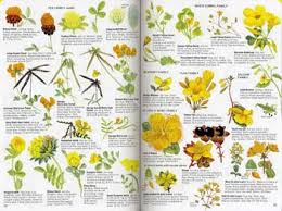 identify wildflowers uk flower shop near me