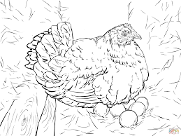 hen laying eggs coloring page free printable coloring pages