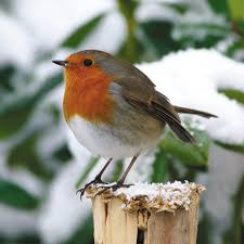 robin cards lights decoration