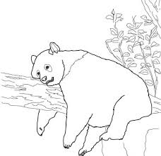 giant panda coloring free printable coloring pages
