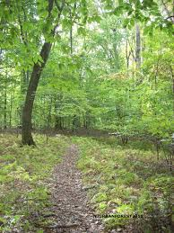 New Jersey forest images Purpose of nj urban forest jpg
