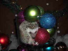 christmas contest 2011 carolina storm hedgehogs