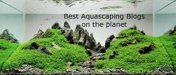 Aquascape Environmental Top 15 Aquascaping Blogs U0026 Websites For Aquascaping Enthusiasts