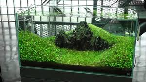 amano aquascape takashi amano s gallery in japan part 1