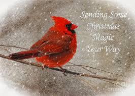 magic cardinal card photograph by lois bryan