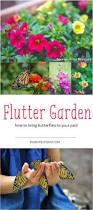 best 25 a butterfly ideas on pinterest butterfly garden plants