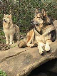 folsom zoo christmas lights 2017 folsom city zoo sanctuary home facebook