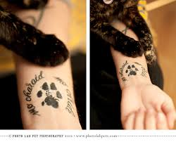 watercolor paw print heart tattoo in 2017 real photo pictures