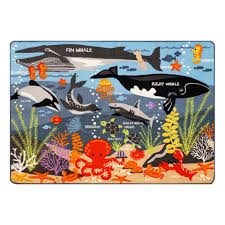 Dolphin Rugs Discover America Educational Rug 40 Inch X 54 Inch Babies