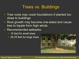 planting trees in areas