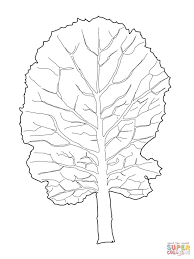collard greens leaf coloring page free printable coloring pages