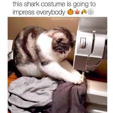 Cute Funny Cat Memes - 29754 best funny cats images on pinterest funny kitties funny