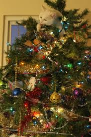 241 best cats in christmas trees images on pinterest christmas