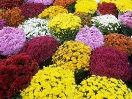 gardens inspired fall blooming flowers and plants