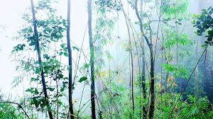 beautiful of tropical grove shrouded in fog fantastic