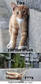 Funny Drunk Memes - lol funny meme drunk cat