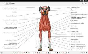 Dog Body Parts Anatomy Vet Anatomy Android Apps On Google Play