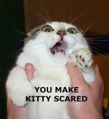 Scared Cat Meme - you make kitty scared cat meme cat planet cat planet