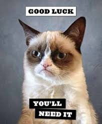Good Luck Cat Meme - good luck you ll need it grumpy cat stuff that makes me think of