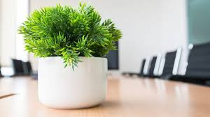 25 office plants that fit on your desk