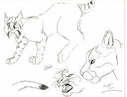 bobcat mountain lion sketch yahto belmonte deviantart