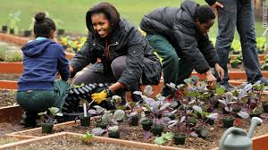 we now know the fate of the white house vegetable garden breaking911