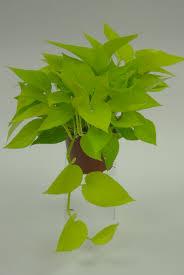The Best Indoor Plants Garden Indoor Palm Lowes Indoor Plants Golden Pothos
