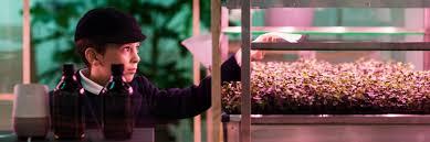 Ikea Flatpack Vertical Garden Ikea U0027s Innovation Lab Launches Indoor Farm