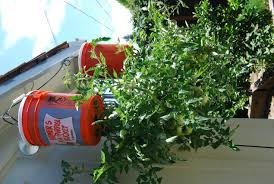 he turns 5 gallon buckets into a backyard garden how i love this