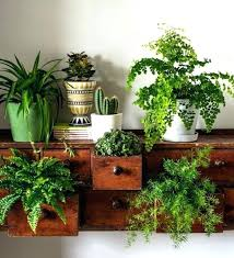 best indoor house plants trees to plant near house banana trees indoor plants