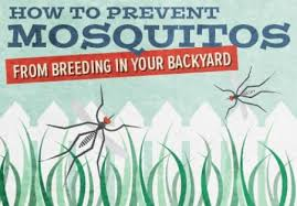 Best Way To Get Rid Of Mosquitoes In Your Backyard How To Keep Mosquitoes Out Of Your Yard Angie U0027s List