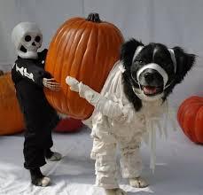 Husky Dog Halloween Costumes 20 Dog Halloween Costumes Ideas Pet