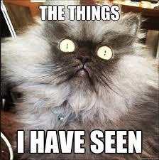 Horrified Meme - the things i have seen horrified cat quickmeme