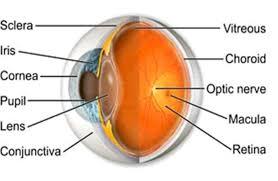 Picture Of Eye Anatomy Human Eye Anatomy Diagram Human Anatomy Body