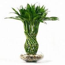 indoor plants nz indoor house plants nz indoor house plants for healthier family