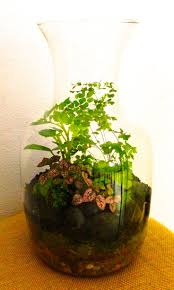 223 best indoor garden images on pinterest gardening plants and