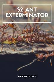 best 25 ant exterminator ideas on pinterest ants in house