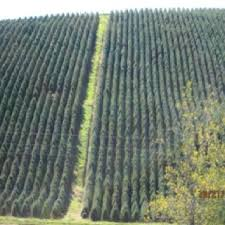 46 best christ winter tree farms u0026 lots images on pinterest