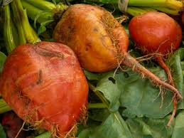 A List Of Root Vegetables - file red orange root vegetable 02 jpg wikimedia commons