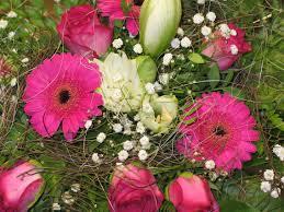 free images nature creative petal celebration love vase