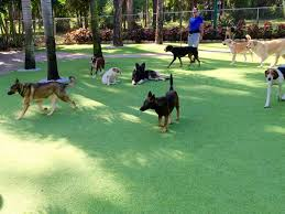 artificial turf cost hancock wisconsin pictures of dogs dogs park