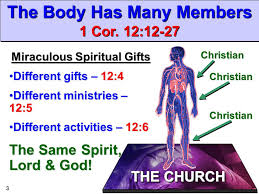 the church many members one ppt