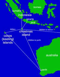 image result for christmas island crabs saltwater prodigy
