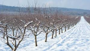 how do trees survive winter mnn nature network