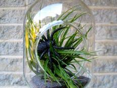 terrarium plants choosing the best plants for your terrarium hgtv