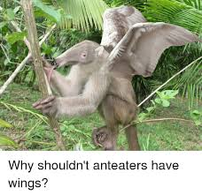 Anteater Meme - why shouldn t anteaters have wings meme on me me
